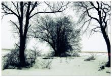 A copse of winter trees silhouetted in the snow.