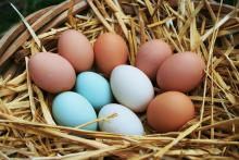 Ten eggs sit in a straw lined basket. Six of the eggs are brown, two are white, and two are light blue.
