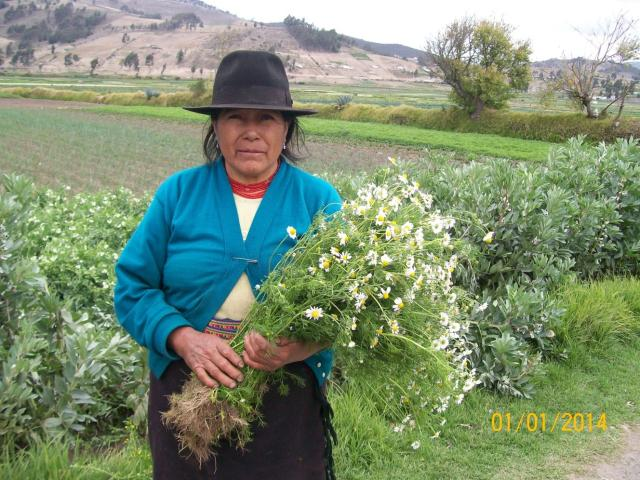 An Indigenous women from rural Ecuador holds a bunch of flowers. Behind her are agricultural fiends and mountains.